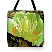 Tulip Poplar Flower - Liriodendron Tulipifera Tote Bag