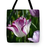 Tulip Splendor Tote Bag