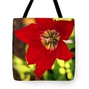 Tulip Star Tote Bag