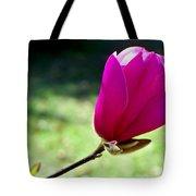 Tulip Tree Blossom Tote Bag