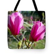 Tulip Tree Blossoms Tote Bag