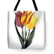 Tulip (tulipa Gesneriana) Tote Bag