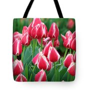 Tulips - Candy Apple Delight 02 Tote Bag