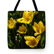 Tulips In Sping Tote Bag