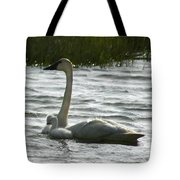Tundra Swan And Signets Tote Bag