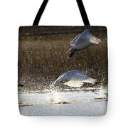 Tundra Swans Take Off 2 Tote Bag