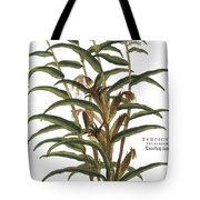 Turkish Corn, 1735 Tote Bag