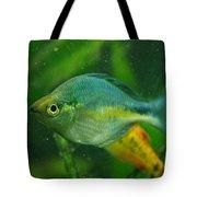 Turquoise Rainbowfish 2 Tote Bag