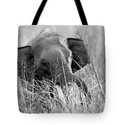 Tusker In The Grass Tote Bag