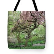 Twisted Cherry Tree In Central Park Tote Bag