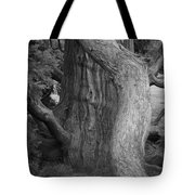 Twisted Old Tree Tote Bag