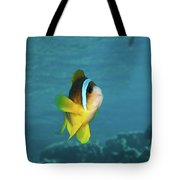 Two-banded Clownfish Tote Bag
