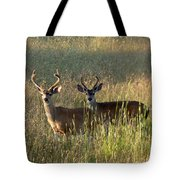 Two Black-tailed Deer In Meadow Grass Tote Bag