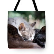 Two Cats  Sleeping  Tote Bag