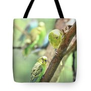 Two Cute Little Parakeets In A Tree Tote Bag
