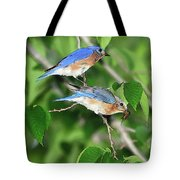 Two Eastern Bluebirds Tote Bag