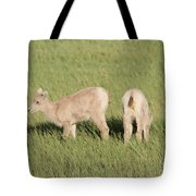 Two Ewes In The Badlands Tote Bag