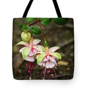 Two Fushia Blossoms Tote Bag by Douglas Barnett