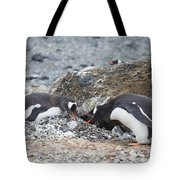 two Gentoos Tote Bag