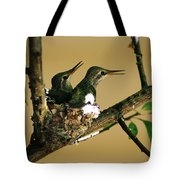 Two Hummingbird Babies In A Nest 5 Tote Bag