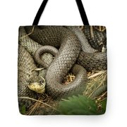 Two Intertwined Grass Snakes Lying In The Sun Tote Bag