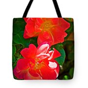 Two Joseph's Coat Roses At Pilgrim Place In Claremont-california Tote Bag
