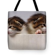 Two Kittens In A Wooden Bucket Tote Bag