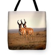 Two Male Pronghorn Antelopes In Alberta Tote Bag