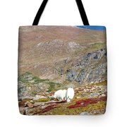 Two Mountain Goats On Mount Bierstadt In The Arapahoe National Fores Tote Bag
