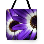 Two Purple N White Daisies Tote Bag