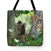 Two Red Shouldered Hawk Chicks Calling Mom  Tote Bag