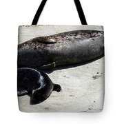 Two Seals Tote Bag