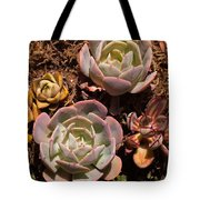 Two Succulents  Tote Bag