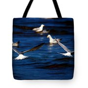 Two Terns A Fly Tote Bag