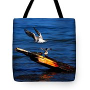 Two Terns A Tango Tote Bag