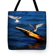 Two Terns Today Tote Bag by Amanda Struz