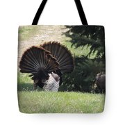 Two Tom Wild Turkeys Sparring To Impress A Hen Tote Bag