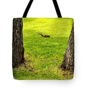 Two Trees And A Squirrel Tote Bag