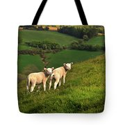 Two Welsh Lambs Tote Bag