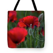 Umbria Poppies Tote Bag