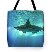 Underwater White Shark Tote Bag