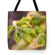 Unfolding Fern Leaf Tote Bag
