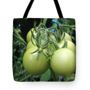 Unripe Cherry Tomatoes  Tote Bag