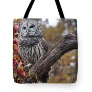 Untitled Owl Tote Bag