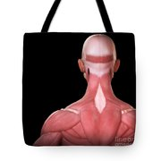 Upper Body Muscles Tote Bag