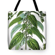 Urtica Dioica, Often Called Common Nettle Or Stinging Nettle Tote Bag