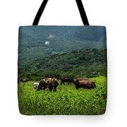 Vacas De Ahuachapan Tote Bag