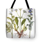 Valerian Flowers, 1613 Tote Bag