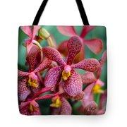 Vanda Orchids Tote Bag