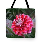 Variegated Colored Dahlia Tote Bag
